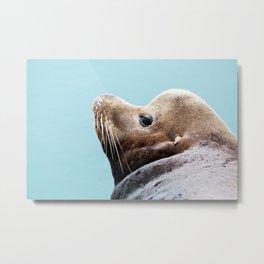 Sea Lion Blues Metal Print
