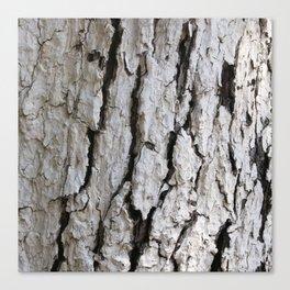 bark abstact no2 Canvas Print
