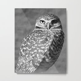 ELF OWL (2) Metal Print