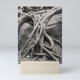 Tree Roots Forest Woods Washington Northwest Boulder Geology Outdoors Landscape Mini Art Print