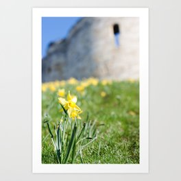 Cliffords Tower Daffodils Art Print