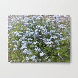 Blue Forget Me Not flowers Metal Print