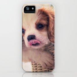 Fuzzywazzi iPhone Case