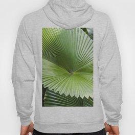 Fan Palms Hoody