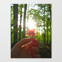 Nature Rays Canvas Print