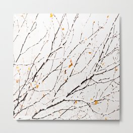 Snowy birch twigs and leaves Metal Print