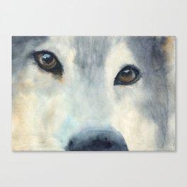 wolf eyes Canvas Print
