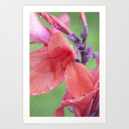 Canna Lily Tropical Macro #6 Art Print