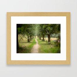 Willow Lane II Framed Art Print