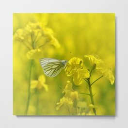 Rape with a butterfly 62 Metal Print