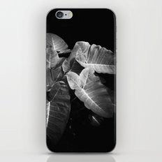 Elephant Ears in the Dark iPhone & iPod Skin