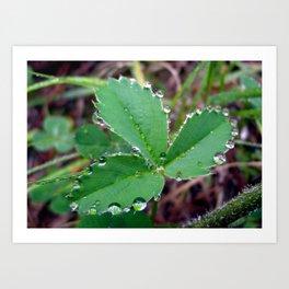 3 Leaf Clover Art Print