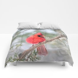 Winter's End Cardinal Comforters