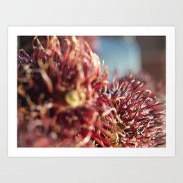 Rambutan #1 Art Print