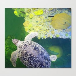 Sea Turtle on Lime Green Canvas Print