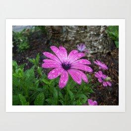 bright purple garden flower Art Print