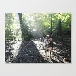 Shira, 5 y/o F, Shepherd Mix, Bronxville, NY Canvas Print