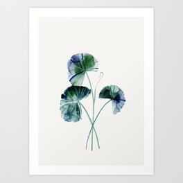 Water lily leaves Art Print