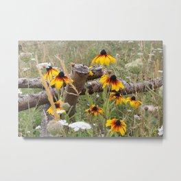 Rudbeckia and Wildflower Meadow Metal Print