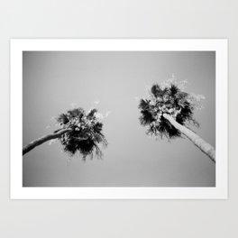 Twin Palms  Art Print