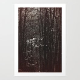 Up in the mountain Art Print