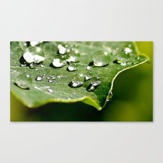 All the little lights Canvas Print
