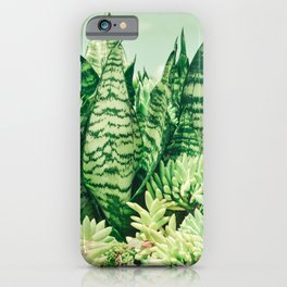 Succulents and Sansevieria iPhone Case