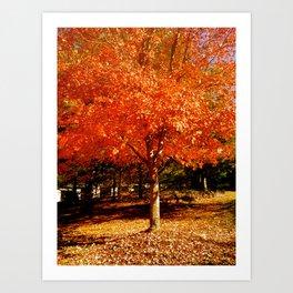 colors of fall Art Print