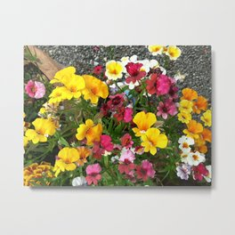 Colorful Nemesia Metal Print