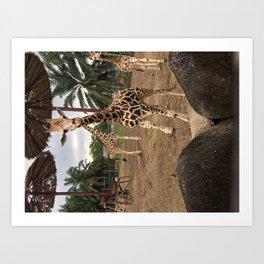 Cute giraffe in a zoo, Malaysia Art Print