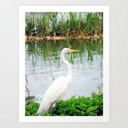 The Great White Egret:) (pointillism)   Large White Bird   Nature Photography Art Print