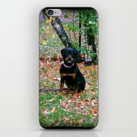 puppy iPhone & iPod Skins featuring Puppy by PSimages