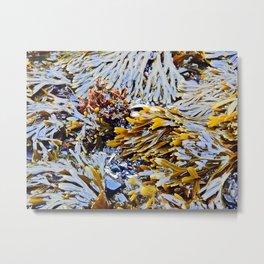 Sea Plants of the St-Lawrence Metal Print