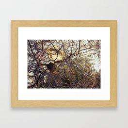 In the trees Framed Art Print