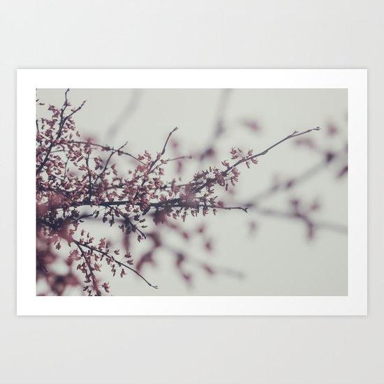 spring by chasitey