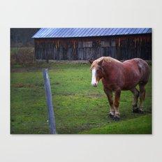 Horse Color Canvas Print