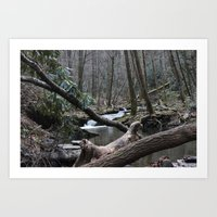 Wooded Waters Art Print