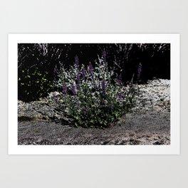 Pop Art Purple Desert Lupine Coachella Preserve Art Print