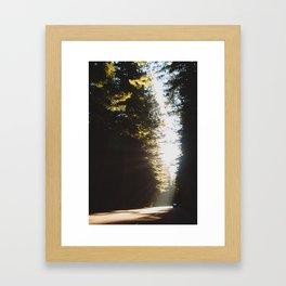 In Redwoods Framed Art Print
