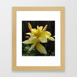 Plumeria in Maryland Framed Art Print