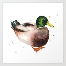 Mallard Morning Art Print