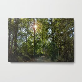 Forest Green and Sky Blue Metal Print