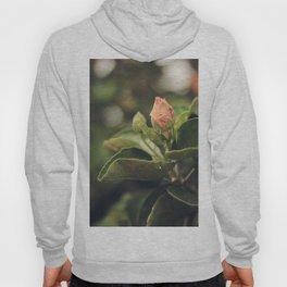 Capullo de Hibisco - Hibiscus bud Hoody