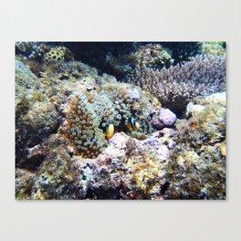 Fish in Sea Anemone Canvas Print