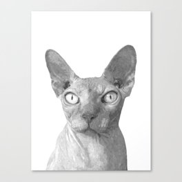 Black and White Sphynx Cat Canvas Print