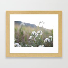 Colorado Wildflower #526 Framed Art Print