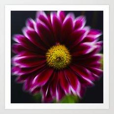 Purple Daisy Zoom Art Print