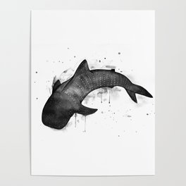 Whale shark, black and white Poster