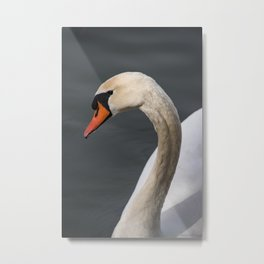 Mute Swan in Winter Metal Print