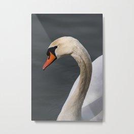 Mute Swan in Winter Metal Print